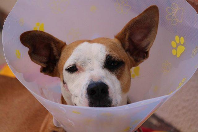 Kompetent hjælp til dit kæledyr på veletableret dyreklinik